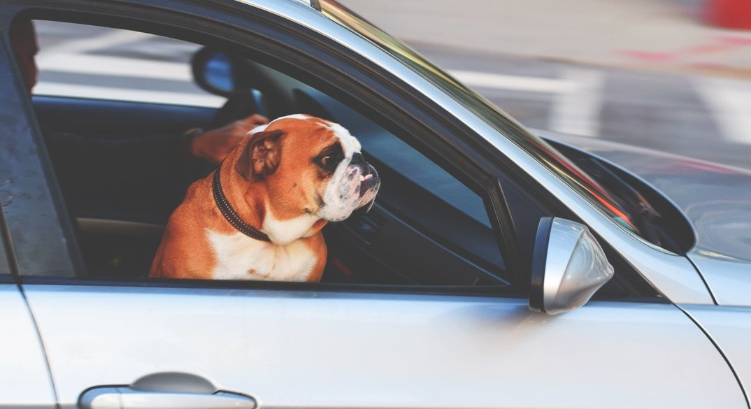 How Do You Safely Take Your Dog in the Car?